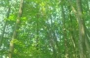 C'è una strada nel bosco